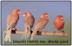 isab-pastel-red-ivoire-non-int-copy